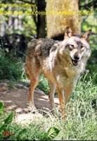 Обложка произведения Волчьи законы Хозяйки леса