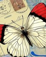 Обложка произведения Мёртвая бабочка