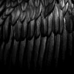 Обложка произведения Черный ангел.