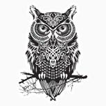 Обложка произведения Чёрные совы Книга 1: Пробуждение